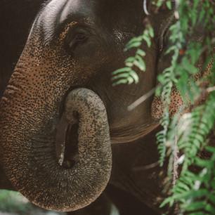 Заповедник слонов в Краби, Таиланд