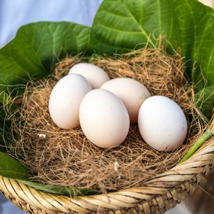 Six Senses Laamu (Мальдивы) запустил органическую птицеферму