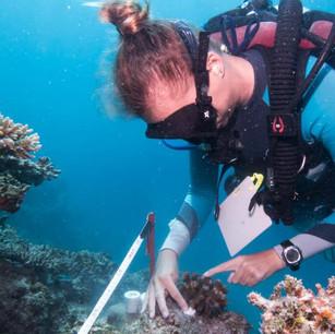 Проект по сохранению рифа в Six Senses Laamu 5* на  Мадьдивах