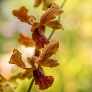 Собственная эксклюзивная Орхидея Kanuhura в отеле Kanuhura 5*, Мальдивы