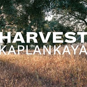 Six Senses Kaplankaya приглашает на велнес-уикэнд Harvest Kaplankaya