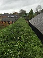 G O'Callaghan Tree Care Ltd: Hedgeword