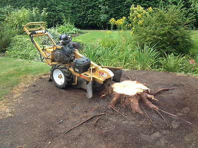 G O'Callaghan Tree Care Ltd: Stump Grinding