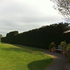 G O'Callaghan Tree Care Ltd: Hedgework