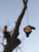 G O'Callaghan Tree Care Ltd: Tree Maintenance