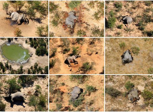 350+ Elephants dead in Botswana