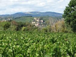 Vigne face au Village de Châtillon
