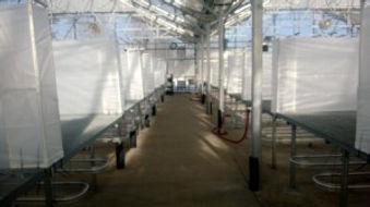 greenhouse3-300x168.jpg