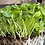 Thumbnail: Organic Sunflower - Black Oil