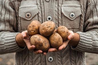 farmer-holding-hands-harvest-potatoes-ga