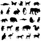 logo animales ra.jpg
