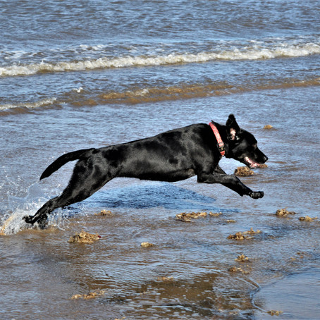 Are you over-exercising your dog?