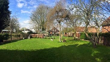 Vippies garden.jpg