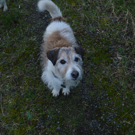 Caring for an ageing dog