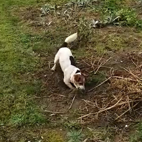 Dogs that dig