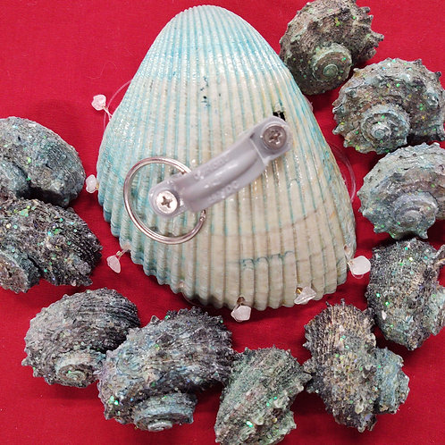Wind chime kit #107 Lg Cockle Shell with rare spiny snail shells