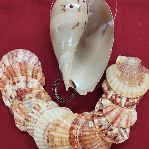 Wind chime kit #120 beautiful white blistered marjin shell put scallops that wil