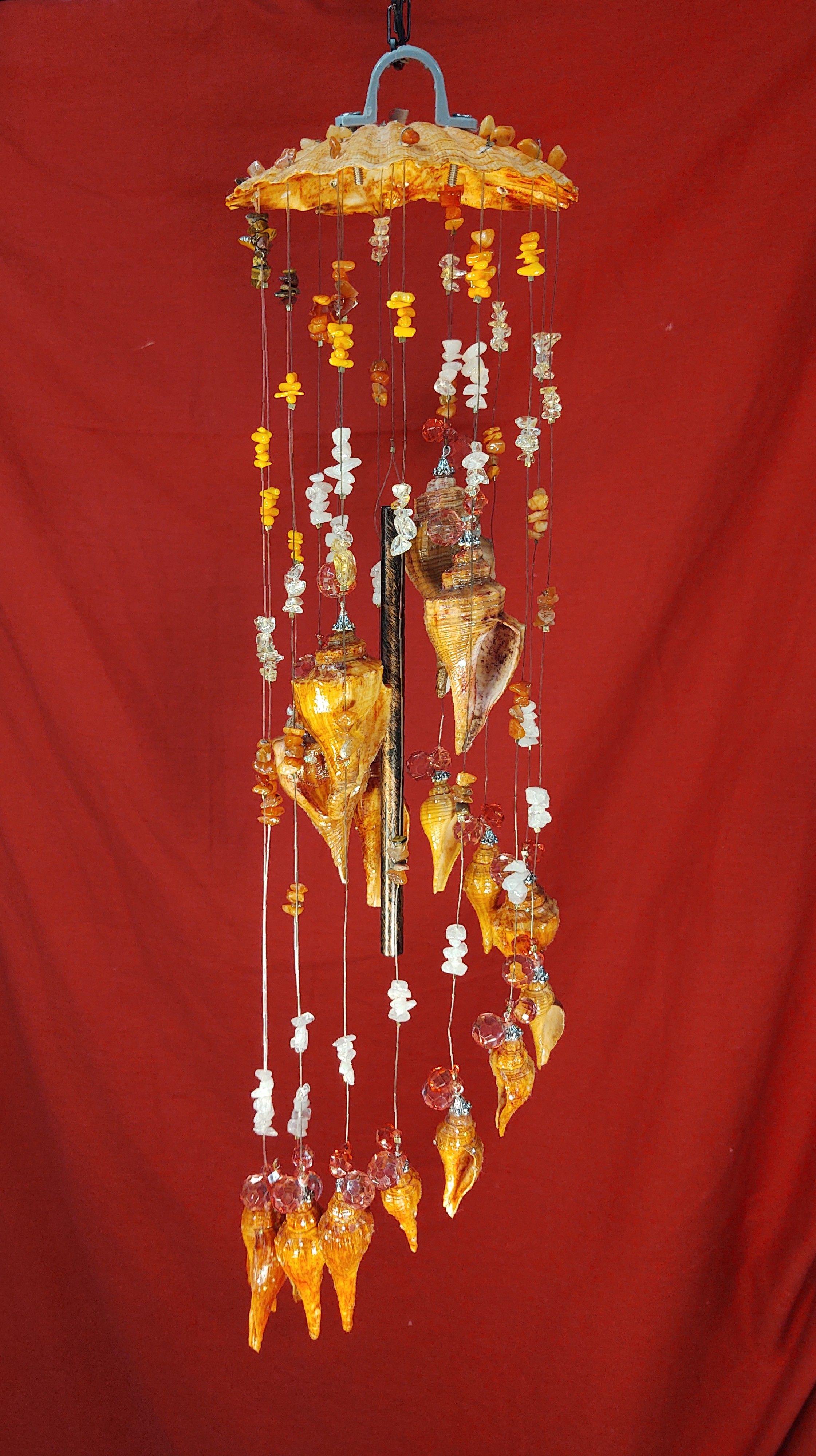 #104  Orange Clam with 18 Orange Whelk s