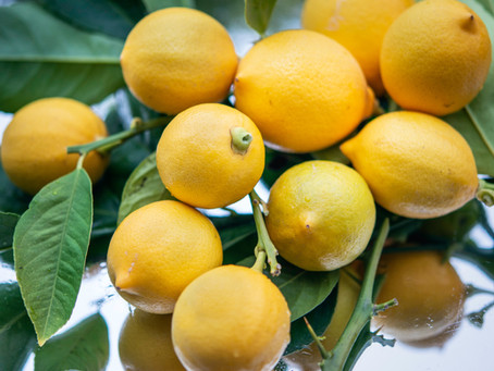 16 Types of Lemons and How to Grow Them Part 1: Eureka to Lisbon!
