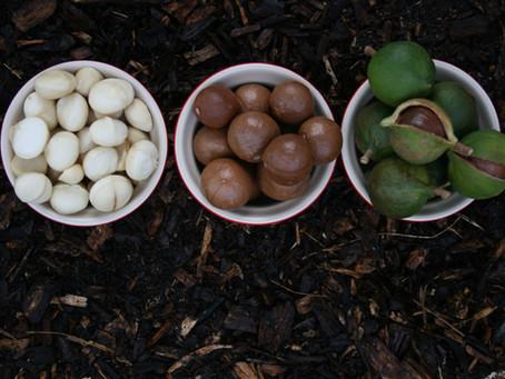 7 Benefits of Macadamia Nuts