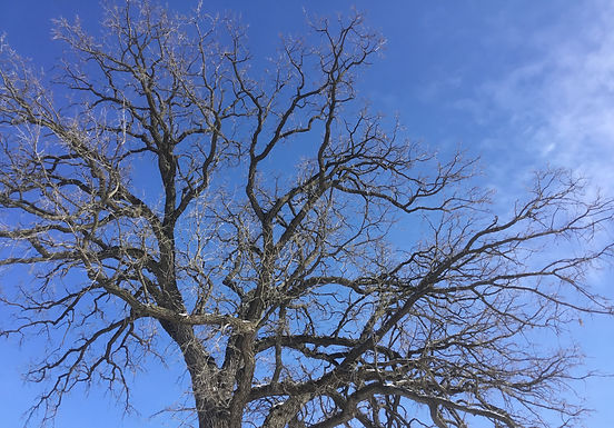 HYMN 326 February By Day the Giant Trees Stand Still and Quiet
