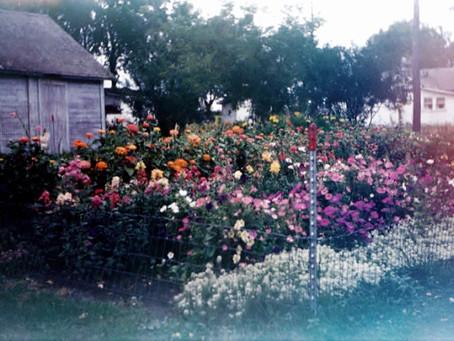 HYMN 322 Thy Word is Like a Garden, Lord