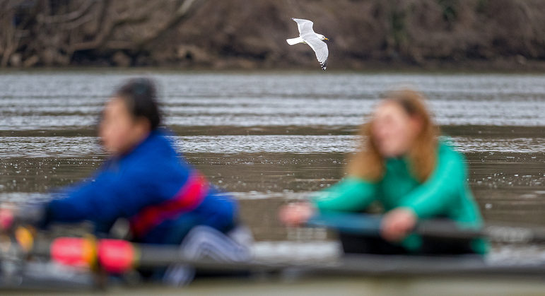 Knapp_Nikon Autofocus Gave Me the Bird .