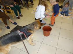 Dusty chien visiteur