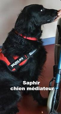 Saphir chien médiateur
