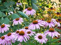 Naturopath herbals liquid herbal extracts and tinctures. Naturopath advice. Buy herbal medicine Online