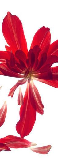 Begonia Array.jpg