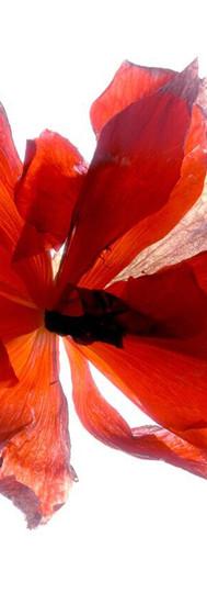 Begonia Round.jpg