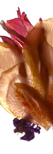Iris Still Life I.jpg