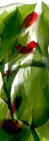 Hosta Begonia Window.jpg