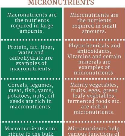 Nutrient 101