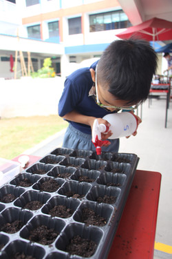 Watering the seeds after sowing
