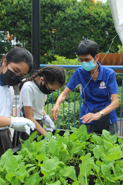 Ms Tham guiding students