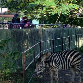 園外保育 動物園に行ってきました🐘🦒
