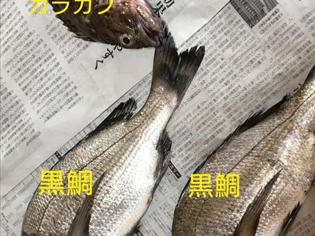 お魚を調理してみました🐟
