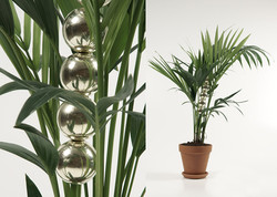David DUBOIS - Plant pearl