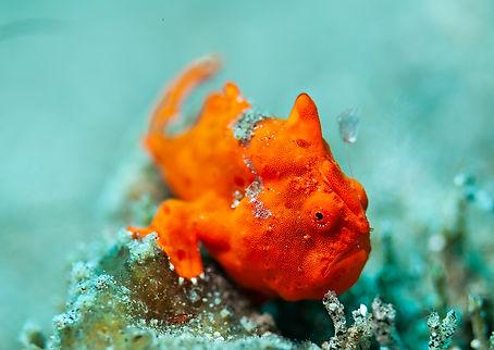 Manfred Wakolbinger Unterwasserfotografi