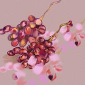 Grapes 04