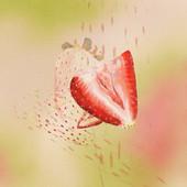 Strawberry 13.jpg