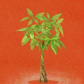 Money Tree — Red 03