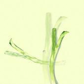Green-Onion-04.jpg