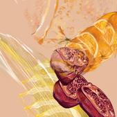 Pomegranate & Citrus 0