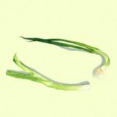Green-Onion-03.jpg