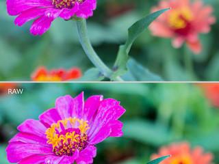 RAW e JPEG - Principais diferenças