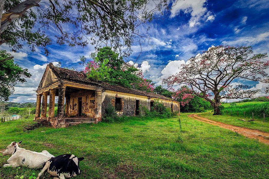 IMG_8614 trato_03 vacas nuvens.jpg