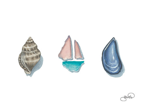 Little Sail Boat, Whelk and Mussel